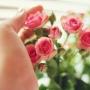Двадцать алых роз